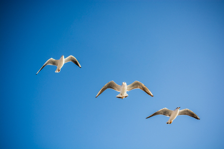 Seagulls are  flying in sky as a background Banco de Imagens
