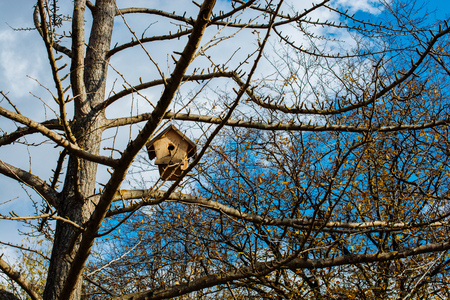 Handmade wooden bird house on tree branch