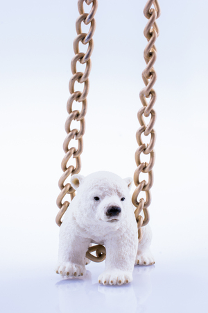 Polar bear cub and chain on a white background Standard-Bild - 120174626