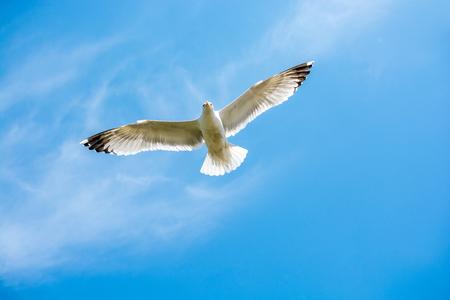 Einzelnes Seemöwenfliegen in einem bewölkten Himmel als Hintergrund