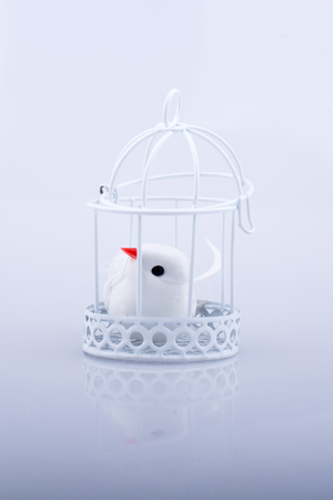 White dove in the cage, Pigeon locked in a cage on a white background Stockfoto
