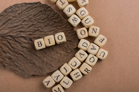 Letter cubes of made of wood around dry leaf