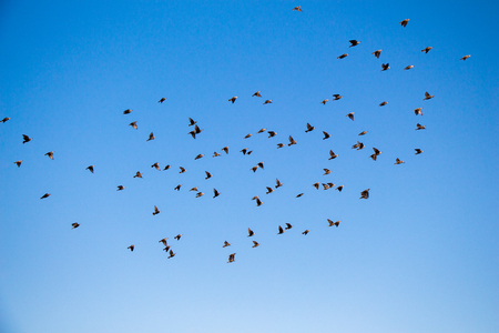 Flock of birds seen flying in the sky