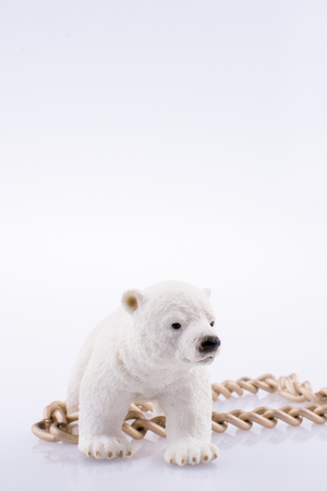 Polar bear cub and chain on a white background