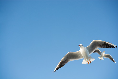 Seagulls are flying in the sky background Zdjęcie Seryjne