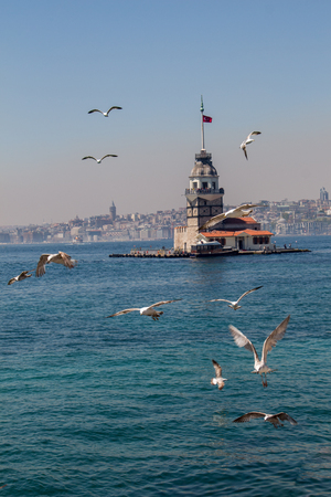 Seagulls and Maidens Tower located in Istanbul