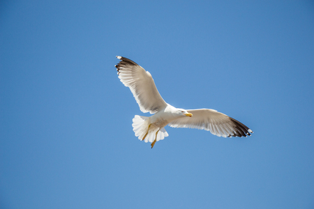 Single seagull flying in a blue sky as a background 写真素材
