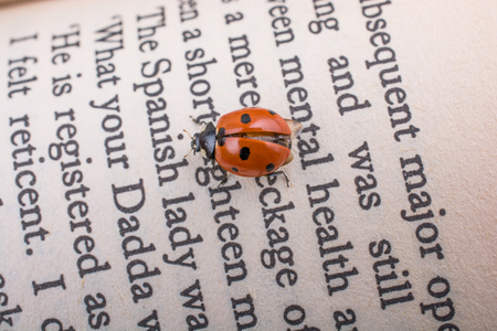 Beautiful photo of red ladybug walking on a book page