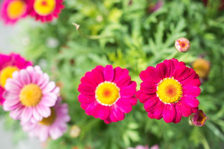 Blooming beautiful colorful fresh natural flowers in view Stockfoto