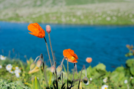 Highland lake in green natural background in Artvin province of Turkey