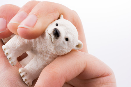 Hand holding White Polar bear model 스톡 콘텐츠
