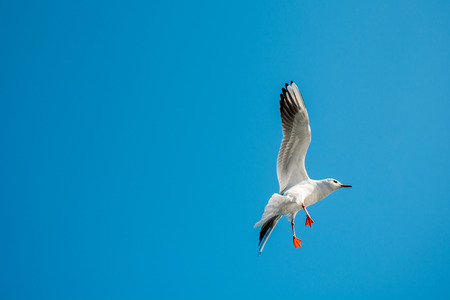 Pair of seagulls flying in the sky Stock Photo