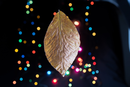 Dry leaf on a bokeh light on a dark