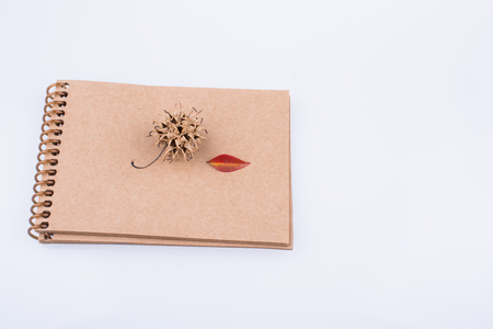 Heart shaped leaf pine cone and a pencil on a notebook on a white background