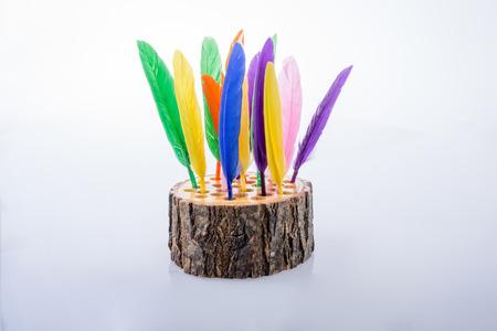 Colección de plumas de colores brillantes sobre un tronco de madera Foto de archivo