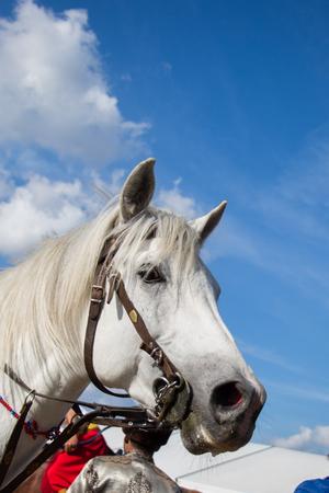 Cabeza de caballo al aire libre con arnés parcial a la vista Foto de archivo