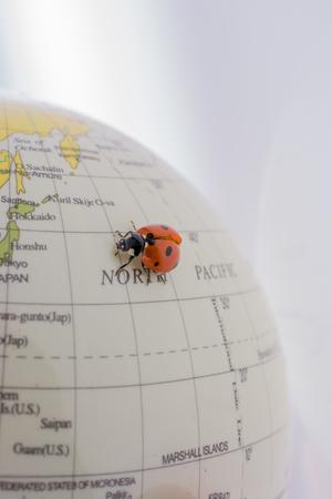Ladybug walking on a little colorful model globe Stok Fotoğraf