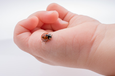 Beautiful photo of red ladybug walking on a child hand