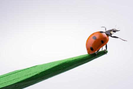 Beautiful photo of red ladybug walking on a wooden stick