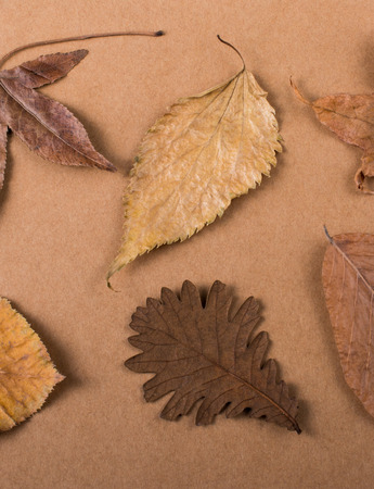 Dry Autumn leaves placed on a paper  texture background