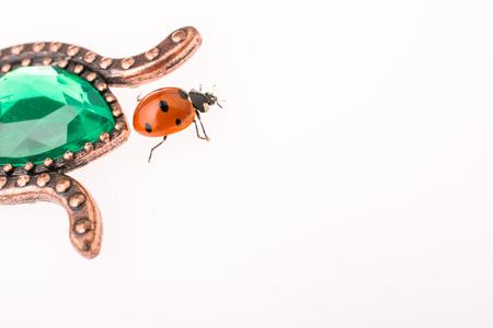 Beautiful photo of red ladybug walking  around objects