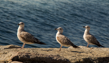 Seagulls are on the rock by the sea waters Stock Photo