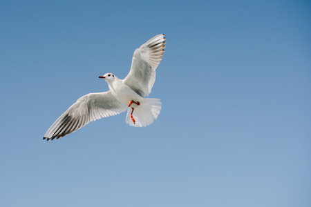 Pair of  seagulls are flying in a sky