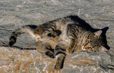 pictures of the Lovely cat as domestic animal in view Stock Photo