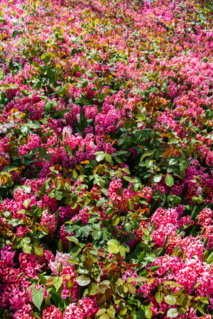 Blooming beautiful colorful fresh natural flowers in view Stock Photo