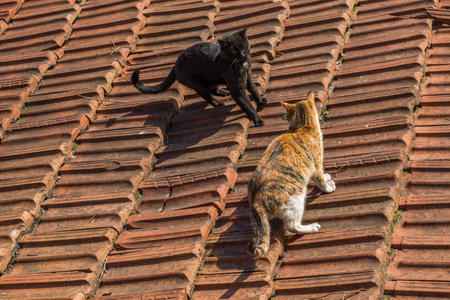 Another portrait of the homeless street cats on the roof
