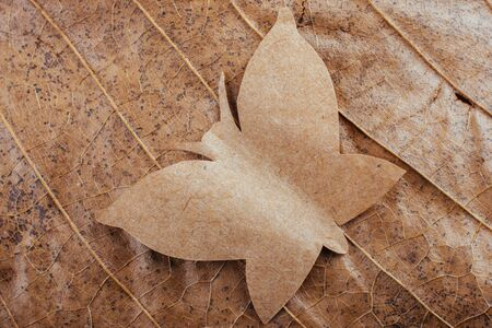 Macro view of dry leaf texture Reklamní fotografie