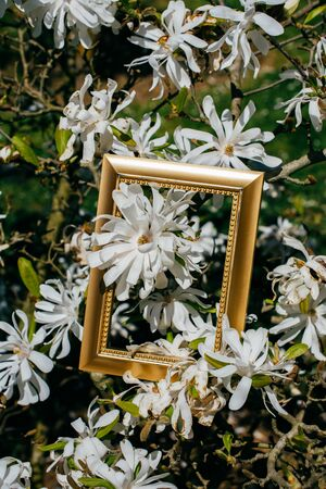 Tree bloom blossom beautiful flowers in wooden frame
