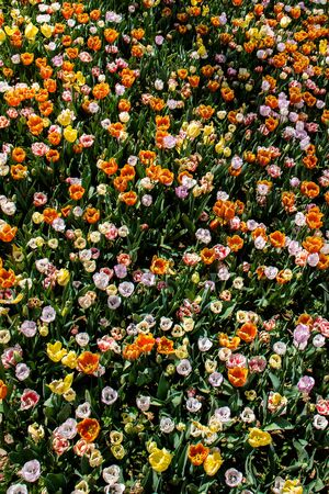 Blooming beautiful colorful natural flowers in view Stok Fotoğraf