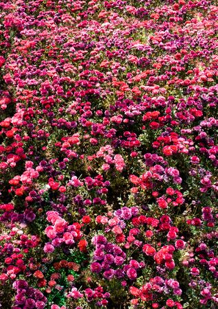 Blooming beautiful colorful fresh natural flowers in view Stok Fotoğraf