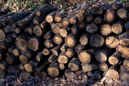 Wooden logs in a forest in the view