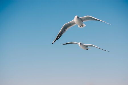 Seagulls are  flying in sky