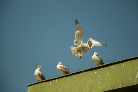 Seagull is sitting on the roof