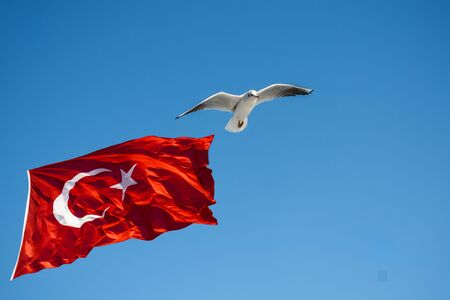Seagull flying by Turkish national flag in blue sky 免版税图像