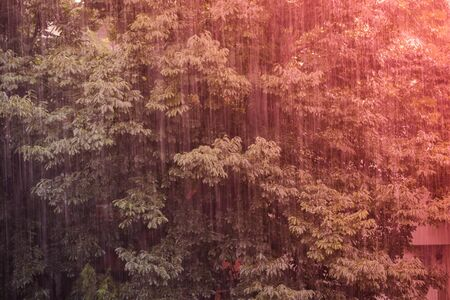 Close up of large tree during rain on display