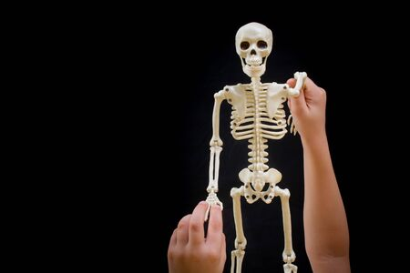 Little boy holding a small size artificial skeleton in hand