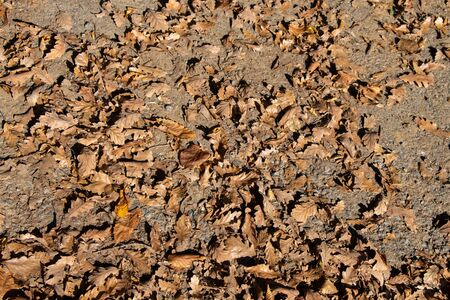 Autumn leaves texture for background. leaf background texture