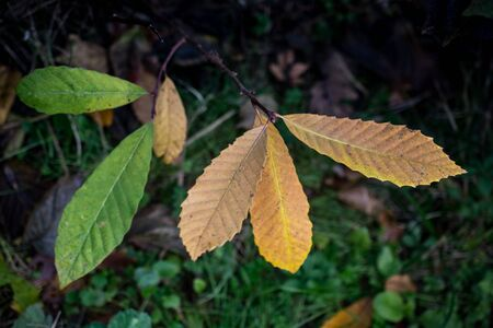 Dry Leaves as Autumn herbal Fall concept  texture