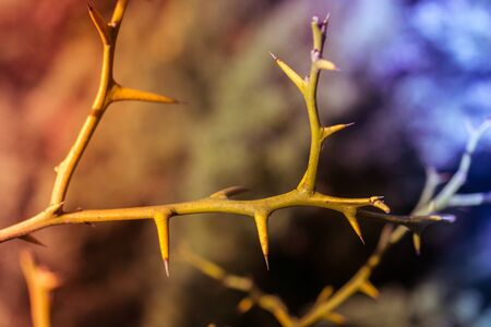 Closeup of Thorny stem of a plant in the view Фото со стока