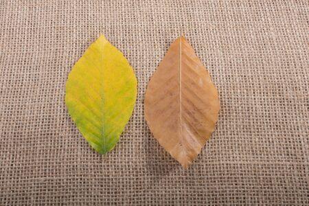 dry Autumn season leaves on linen canvas