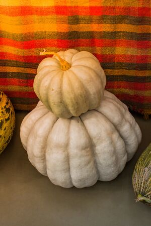 Two white pumpkins on top of each other near melons in display