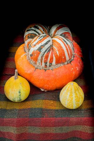 An orange pumpkin and two tiny yellow pumpkins in display