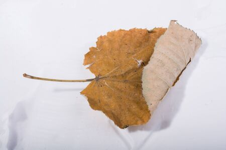 One separate dry leaf  of Autumn times Фото со стока
