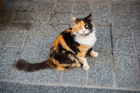 Portrait of a lovely cat as domestic animal in view