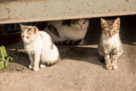 Portrait of a homeless street cats in the street