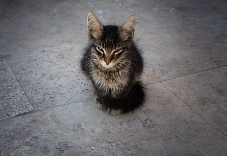 Portrait of  a lovely kitten as domestic animal in view